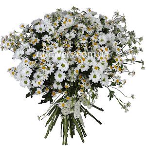 Букет из 27 белых роз - премиум