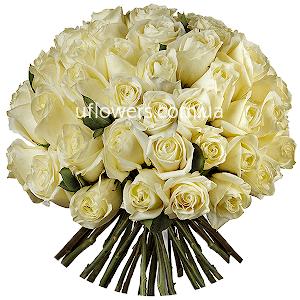 Белые розы 51 шт.