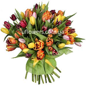 Тюльпаны (51 шт.)