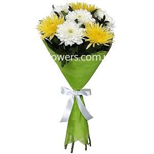 Хризантема одноголовая (7 шт.)
