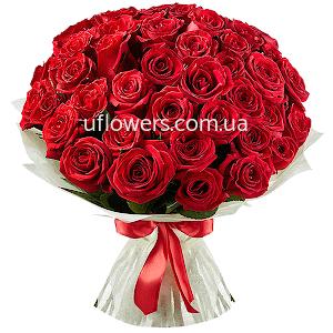 Красные розы элитные 51 шт.